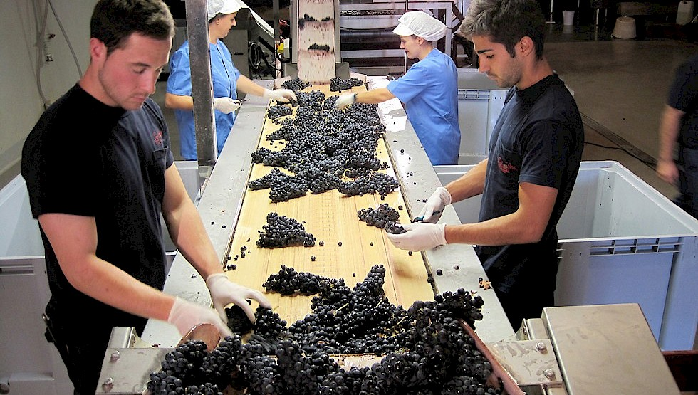 Bodegas Luis Canas produces high-quality reds and whites at its Villabuena de Alava winery. Photo: Luis Canas